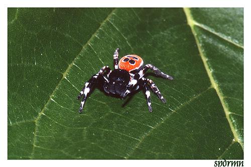 """фото """"A smile on my... back!?"""" метки: природа, макро и крупный план, насекомое"""