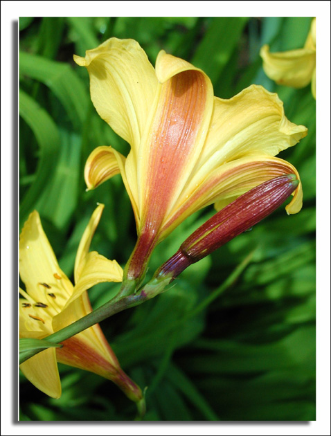 "photo ""Lily"" tags: nature, flowers"