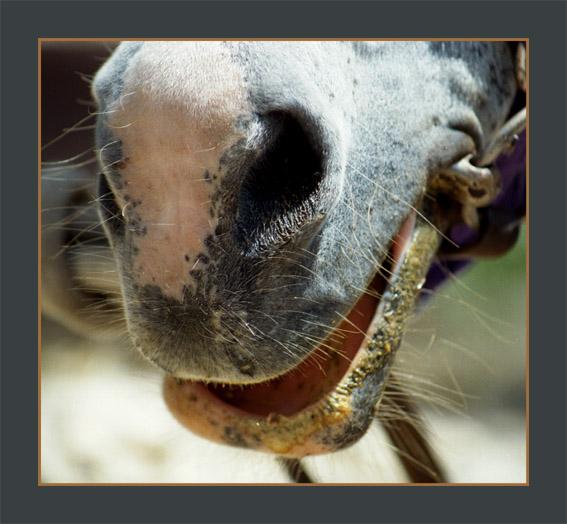 "photo ""Djokonda"" tags: nature, pets/farm animals"