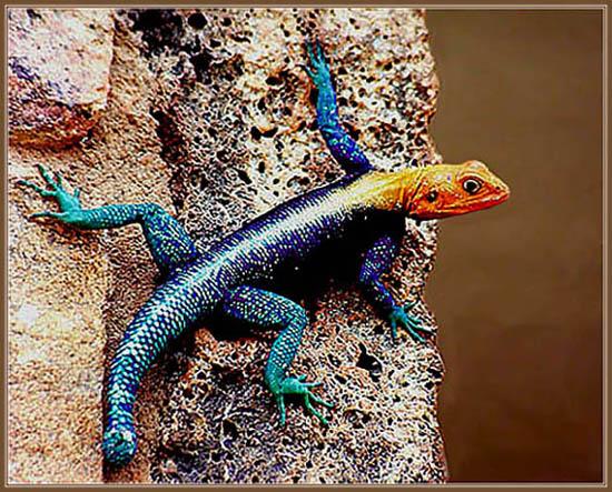 """фото """"Живая радуга"""" метки: природа, дикие животные"""