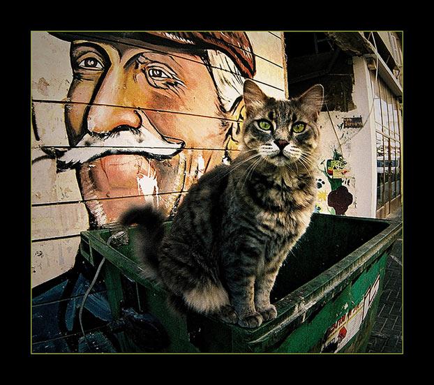 """фото """"Midle east cat"""" метки: разное,"""
