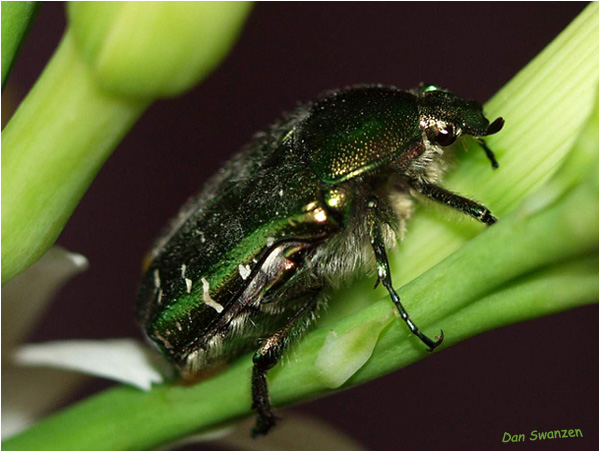 """фото """"And I such green..."""" метки: природа, макро и крупный план, насекомое"""