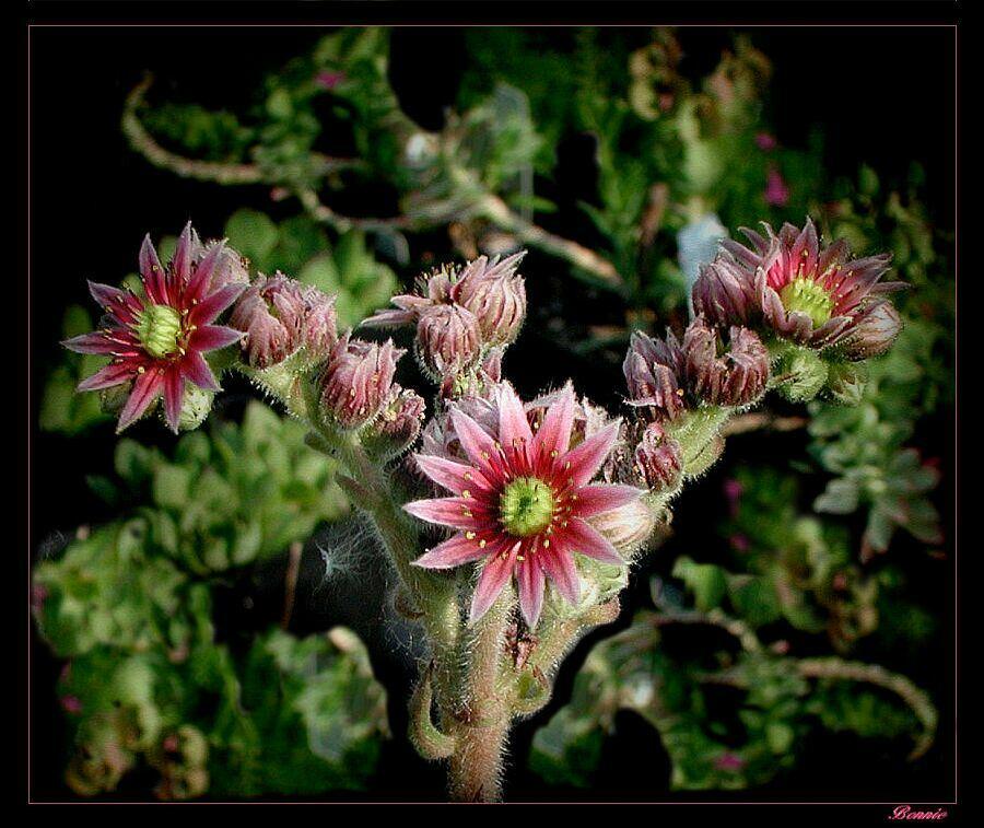 """фото """"Family"""" метки: природа, макро и крупный план, цветы"""