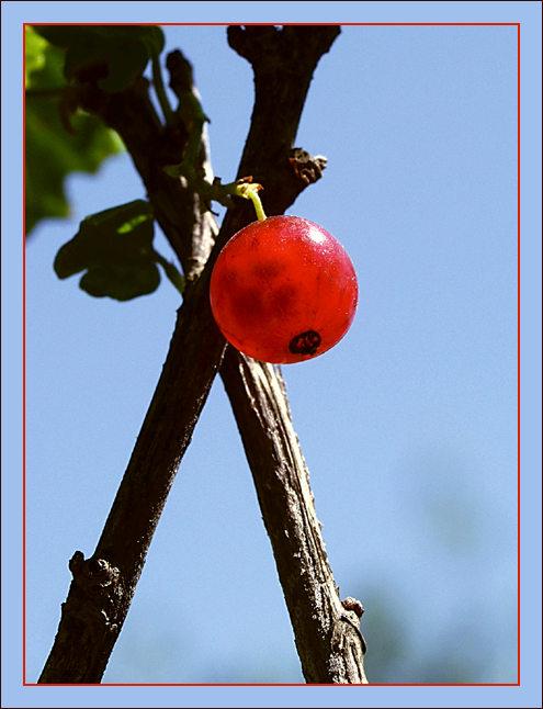 """фото """"X-file"""" метки: абстракция, природа, цветы"""
