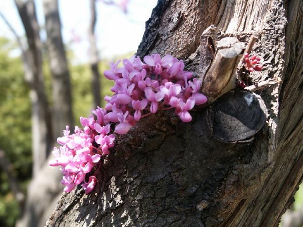 """фото """"кусочек жизни"""" метки: природа, цветы"""