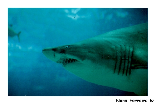 "фото ""Shark"" метки: репортаж, разное,"