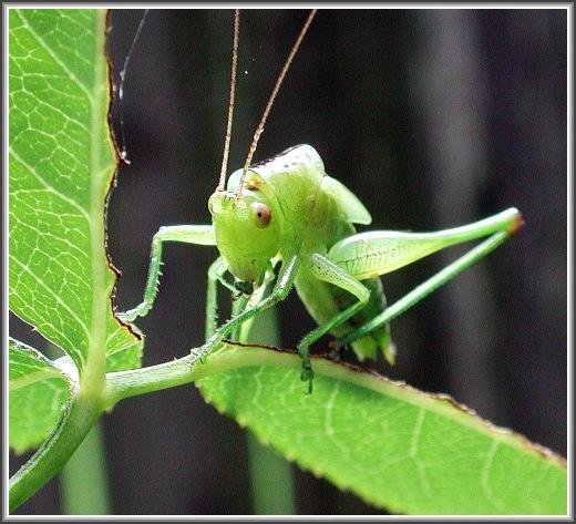 """фото """"Мыслитель"""" метки: макро и крупный план, природа, насекомое"""