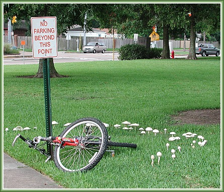 "photo ""Fairy Ring"" tags: humor, architecture, landscape,"