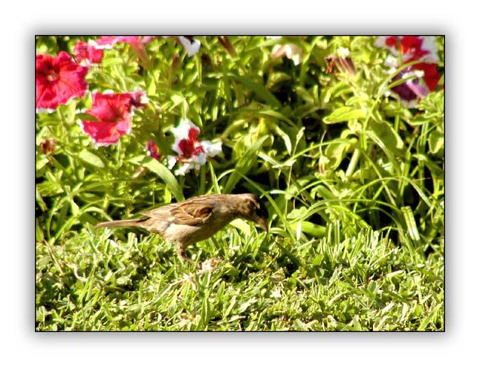 "фото ""Piu Piu"" метки: природа, дикие животные"