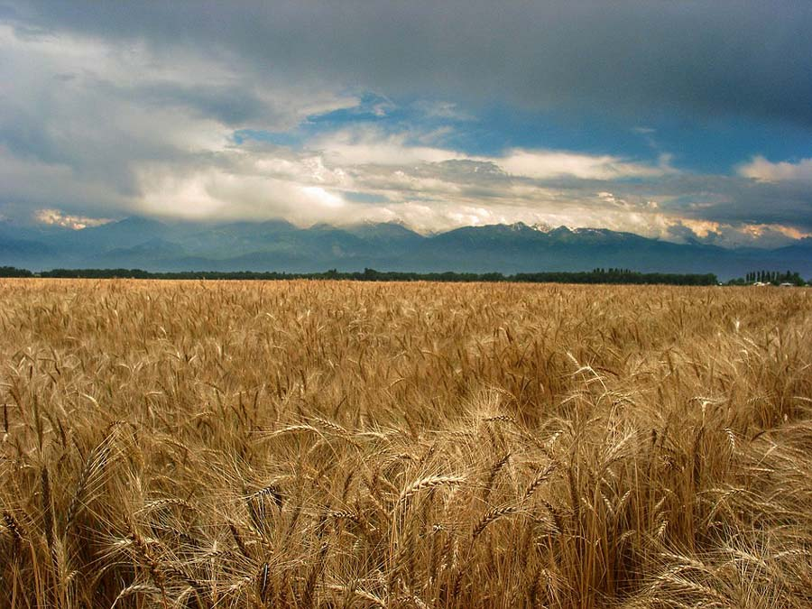 """фото """"Alatau II"""" метки: пейзаж, лето, облака"""