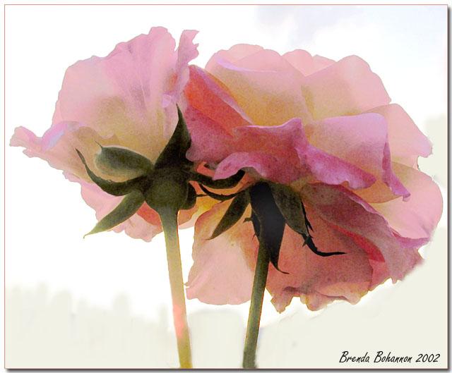 """фото """"In the Garden"""" метки: природа, цветы"""