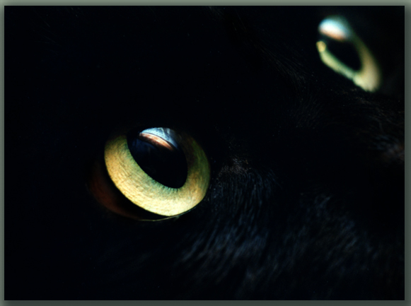 "photo ""Cats_Eyes"" tags: nature, macro and close-up, pets/farm animals"