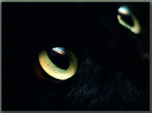 """фото """"Cats_Eyes"""" метки: природа, макро и крупный план, домашние животные"""