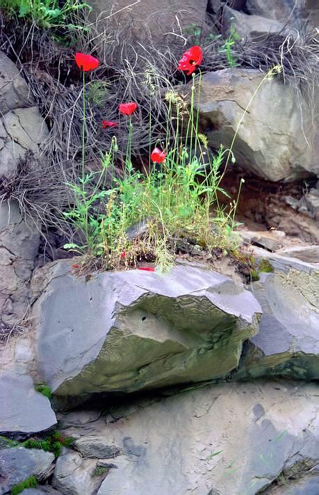"photo ""All-triumphant life (3)"" tags: nature, genre, flowers"