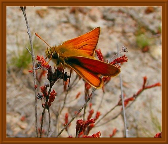"фото ""Lover"" метки: природа, насекомое"