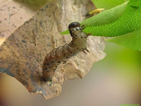 """фото """"""""Над пропастью""""!"""" метки: макро и крупный план, природа, насекомое"""