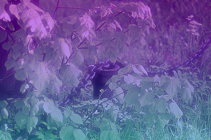 """фото """"Оковы зеленого мира..."""" метки: природа, фотомонтаж, цветы"""