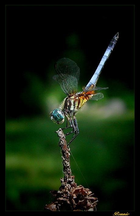 """photo """"Balancing Act"""" tags: nature, macro and close-up, insect"""