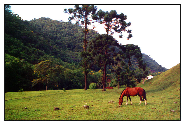 "photo ""Track of the Gold"" tags: travel, nature, South America, pets/farm animals"