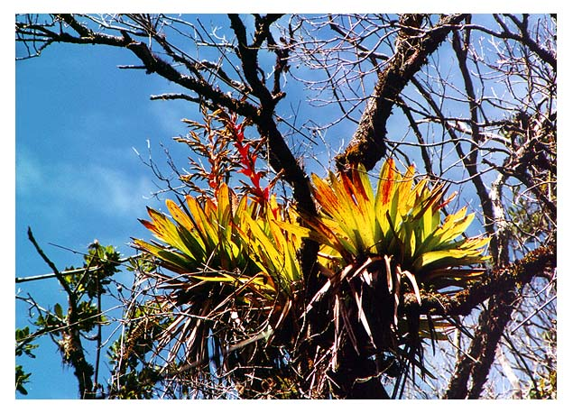 "photo ""Bromelia"" tags: nature, travel, South America, flowers"