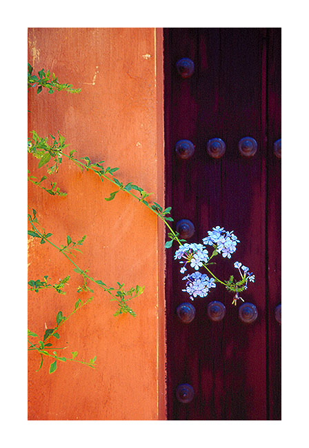 "фото ""Details..."" метки: путешествия, природа, Европа, цветы"