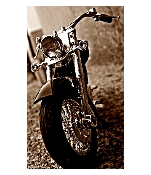 "photo ""Harley"" tags: glamour,"