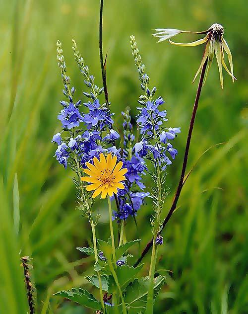 """фото """"Времена"""" метки: природа, цветы"""