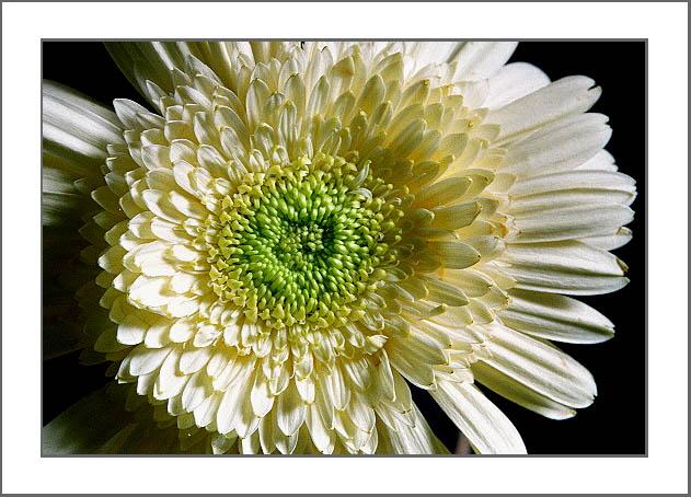 """фото """"Simple"""" метки: макро и крупный план, природа, цветы"""