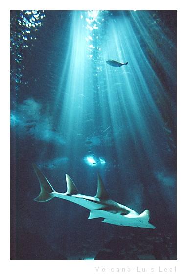 "photo ""Deep Sea"" tags: nature, wild animals"
