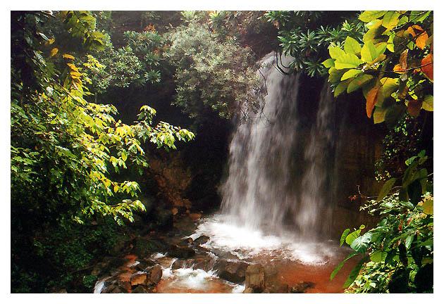 """фото """"Salgadeira"""" метки: природа, путешествия, Южная Америка, цветы"""