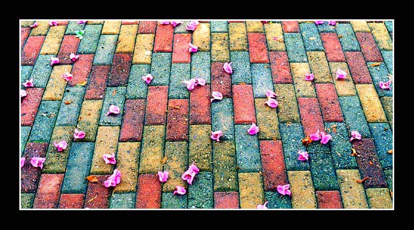 "photo ""Flowers in the road"" tags: abstract, misc.,"