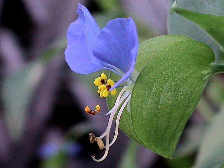 """фото """"Кое-что новое  о простых комнатных растениях"""" метки: макро и крупный план, природа, цветы"""