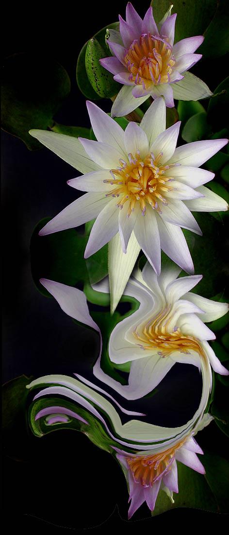 """фото """"The dance of the flowers"""" метки: фотомонтаж,"""