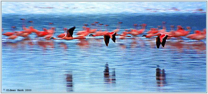 """фото """"Тонкая красная линия"""" метки: природа, путешествия, Африка, дикие животные"""