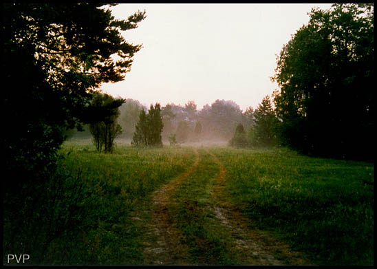 "photo ""Morning"" tags: landscape, forest, summer"