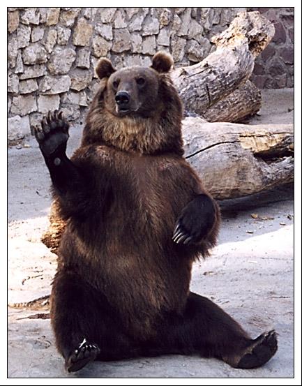 """фото """"Привет, ребята!"""" метки: природа, портрет, дикие животные"""