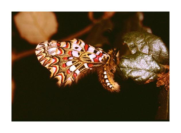 """фото """"Без названия"""" метки: макро и крупный план, природа, насекомое"""