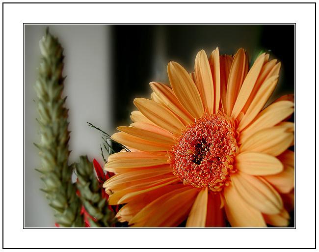 """фото """"I was missing a Flower!"""" метки: макро и крупный план,"""