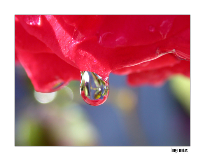 "photo ""Tear"" tags: macro and close-up,"