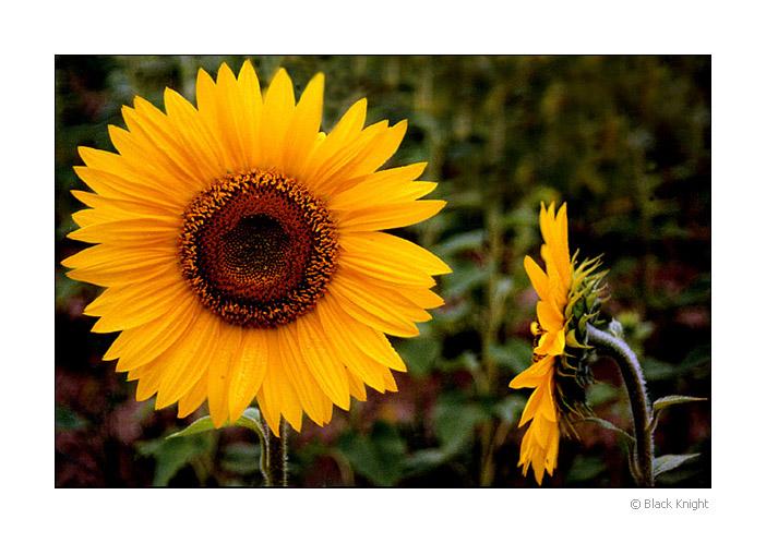 "фото ""Psst..Look at me"" метки: природа, юмор, цветы"