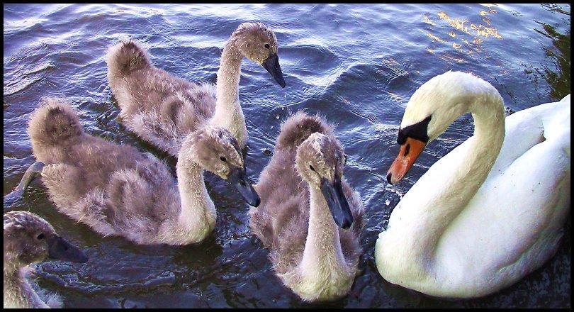 """фото """"All in the Family"""" метки: природа, дикие животные"""