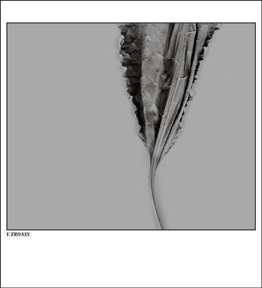 """фото """"Композиция в серых тонах."""" метки: абстракция, фотомонтаж,"""