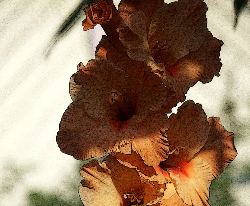 "photo ""Gladiolus"" tags: nature, flowers"
