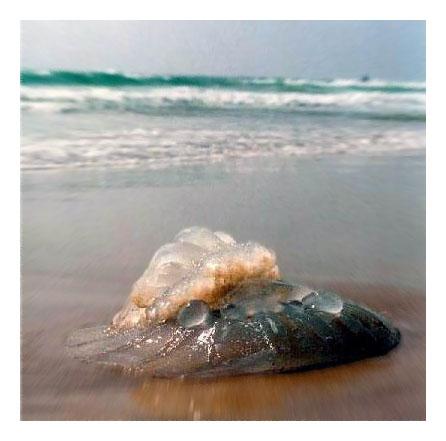 "фото ""Дары моря"" метки: природа,"