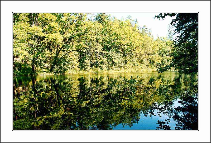 "photo ""The mirror of the silence"" tags: landscape, forest, summer"
