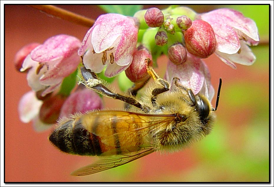 "photo ""Just a bee"" tags: nature, macro and close-up, insect"