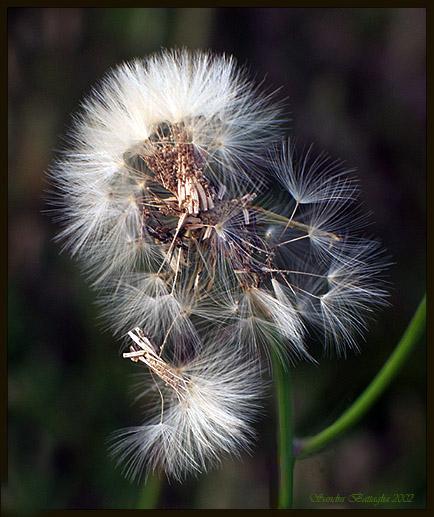"фото ""Feather Dusters"" метки: макро и крупный план, юмор,"