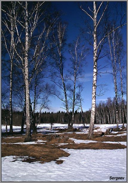 """фото """"Сияющий март"""" метки: пейзаж, весна, лес"""