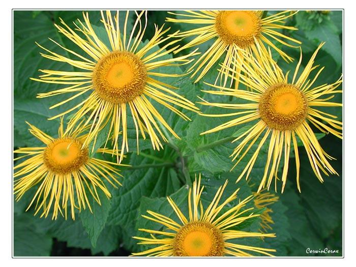 """фото """"Sunny"""" метки: природа, цветы"""