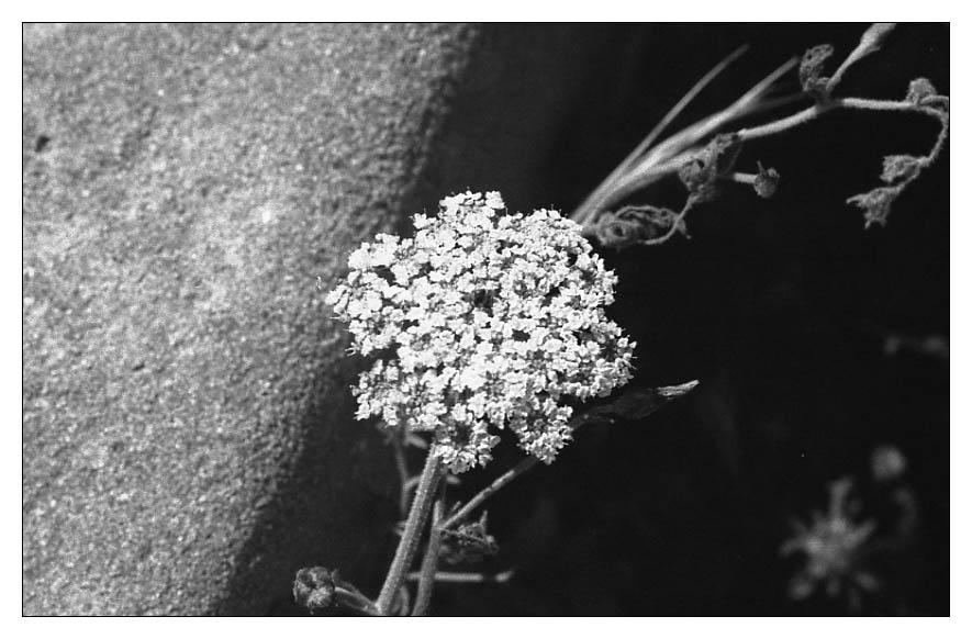 "фото ""The Moon and the flower"" метки: природа, абстракция, цветы"